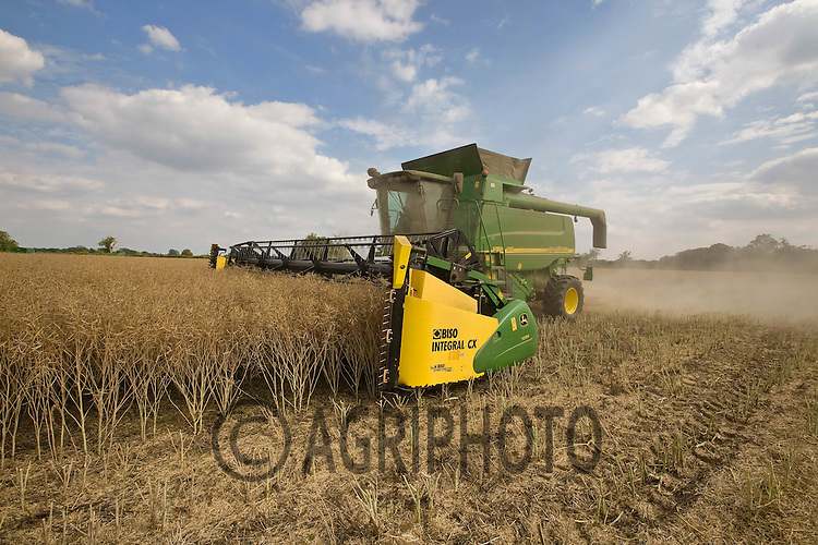 Harvest Oil Seed Rape at 6.9% Moisture at Henry Hirst Farm's,Home Farm,Uffington,Lincolnshire..Picture Tim Scrivener date taken 31st July  2011 .mobile 07850 303986 e-mail tim@agriphoto.com.....covering Agriculture in The United Kingdom.....
