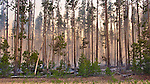 Forest Fire in the Cascade Mountains near Crater Lake National Park, Oregon