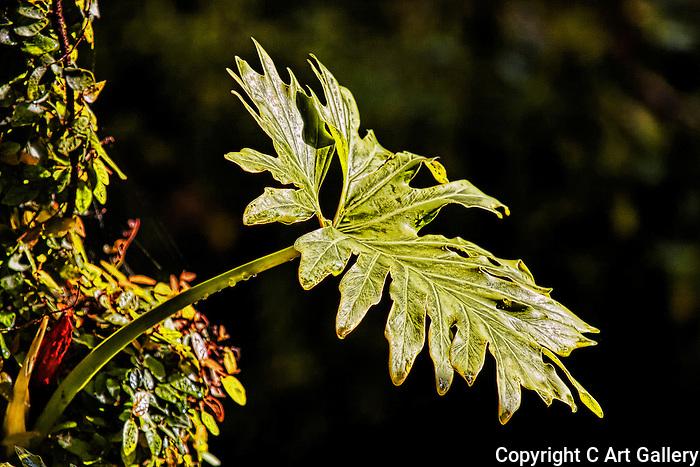 Green Leaf, Newport Beach, CA