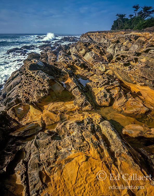 Sandstone, Del Mar Point Ecological Preserve, Sea Ranch, Sonoma County Coast, California