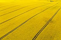 Raps, Rapsfeld, Rapsacker, Acker, Raps-Anbau, Rapsanbau, Feld, Acker, Ackerbau, Brassica napus, Oilseed Rape, rape, rapeseed, field. Luftaufnahme, Schleswig-Holstein