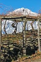 Italie, Val d'Aoste, Morgex:   Vignes  en pergola d' Ermes Pavese , dans le  hameau de Villaret avec en fond le Mont Blanc // Italy, Aosta Valley, Morgex: Ermes Pavese vineyards, village of Villaret with Mont Blanc in the background