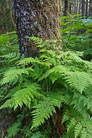 Tongass National Forest, Southeast, Alaska.