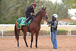 Track Work: February 19 2021: MILITARY LAW (GB) Track work from King Abddulaziz Racetrack, Riyadh, Saudi Arabia. Shamela Hanley/Eclipse Sportswire/CSM FEBRUARY 19 2021: The Saudi Cup Preparations.