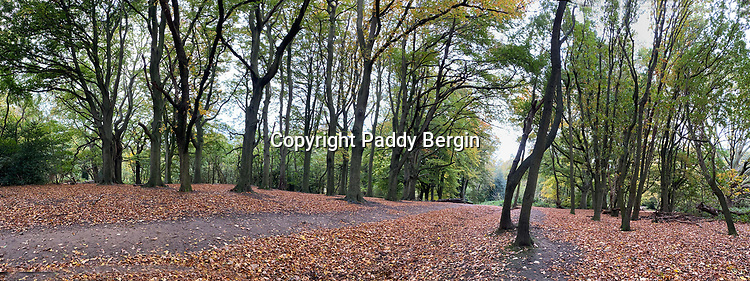 Inside the woods at Hampstead Heath as Autumn takes hold.<br /> <br /> Stock Photo by Paddy Bergin