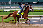 LOUISVILLE, KY -APR 25: Kentucky Derby hopeful Vino Rosso trains for the Kentucky Derby at Churchill Downs, Louisville, Kentucky. (Photo by Mary M. Meek/Eclipse Sportswire/Getty Images)