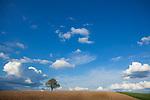 Europa, DEU, Deutschland, Baden-Württemberg, Odenwald, Mosbach-Reichenbuch, Agrarlandschaft, Blauer Himmel, Wolken, Cumuluswolken, Feld, Einzelner Baum.  Kategorien und Themen, Natur, Umwelt, Landschaft, Jahreszeiten, Stimmungen, Landschaftsfotografie, Landschaften, Landschaftsphoto, Landschaftsphotographie, Wetter, Himmel, Wolken, Wolkenkunde, Wetterbeobachtung, Wetterelemente, Wetterlage, Wetterkunde, Witterung, Witterungsbedingungen, Wettererscheinungen, Meteorologie, Bauernregeln, Wettervorhersage, Wolkenfotografie, Wetterphänomene, Wolkenklassifikation, Wolkenbilder, Wolkenfoto<br /> <br /> [Fuer die Nutzung gelten die jeweils gueltigen Allgemeinen Liefer-und Geschaeftsbedingungen. Nutzung nur gegen Verwendungsmeldung und Nachweis. Download der AGB unter http://www.image-box.com oder werden auf Anfrage zugesendet. Freigabe ist vorher erforderlich. Jede Nutzung des Fotos ist honorarpflichtig gemaess derzeit gueltiger MFM Liste - Kontakt, Uwe Schmid-Fotografie, Duisburg, Tel. (+49).2065.677997, archiv@image-box.com, www.image-box.com]