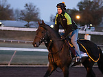 True Timber, trained by trainer Jack Sisterson, exercises in preparation for the Breeders' Cup Dirt Mile at Keeneland Racetrack in Lexington, Kentucky on November 2, 2020.