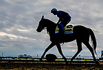 October 2, 2020: Mr. Big News returns to the barn just after sunrise as rain clouds start to break while horses prepare for Preakness Stakes Week races at Pimlico Race Course in Baltimore, Maryland. Scott Serio/Eclipse Sportswire/CSM