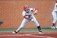 Carson Shaddy (20) of the Arkansas Razorbacks lays down a bunt against the Charlotte 49ers at Hayes Stadium on March 21, 2018 in Charlotte, North Carolina.  The 49ers defeated the Razorbacks 6-3.  (Brian Westerholt/Four Seam Images)