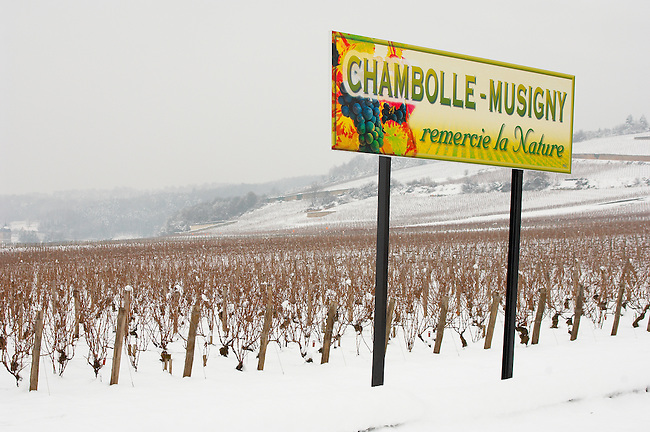 Chambolle Musigny vineyards in the snow.  - Cote D'or, Beaune, France.