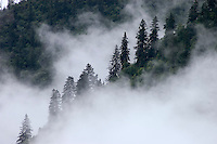Mist rises from the forest during the summer monsoon - Kham, (eastern, Tibet), Sichuan Province, China