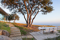 Oak trees (Quercus agrifolia) in California native plant garden around modern home on hill overlooking Pacific Ocean, Santa Barbara,