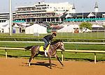 28 April 2010: Paddy O' Prado gallops at Churchill Downs, Louisville, KY.