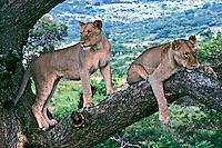 Animais em reserva natural, Umfolozi. África do Sul. 2002. Foto de Vinicius Romanini,