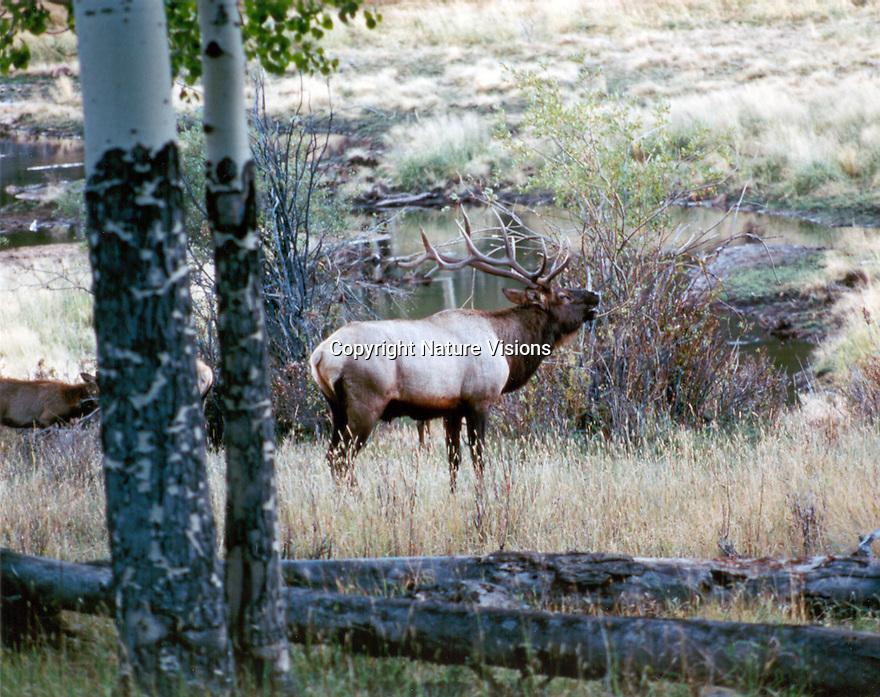 ROCKY MOUNTAIN NATIONAL PARK,COLORADO