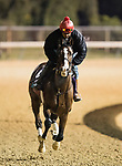 October 28, 2018 : War of Will, trained by Mark E. Casse, exercises in preparation for the Breeders' Cup Juvenile Turf  at Churchill Downs on October 28, 2018 in Louisville, Kentucky. Evers/ESW/CSM