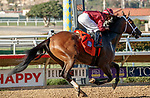 DEL MAR, CA  AUGUST 1:  #7 Shedaresthedevil, ridden by Florent Geroux, is IN the Breeders Cup Distaff after winning the Clement L. Hirsch Stakes (Grade 1) Breeders Cup Win and You're In Distaff Division on August 1, 2021 at Del Mar Thoroughbred Club in Del Mar, CA.