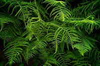 Close up of fern. Cornwall, England