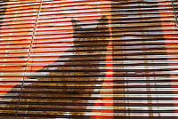 THIS IMAGE IS AVAILABLE EXCLUSIVELY FROM GETTY IMAGES.....Please search for image # 200535113-001 on www.gettyimages.com.....Cat hiding behind bamboo window shades in a New York City apartment on a sunny afternoon, New York City, New York, USA