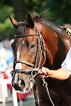 31 May 2010: You and I Forever before the Metropolitan Mile Handicap at Belmont Park in Elmont NY.