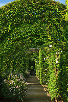 """Les jardins du prieuré d'Orsan : autour du """"parterre"""" un couloir de charmilles et de rosiers grimpants<br /> <br /> Mention obligatoire du nom du jardin et pas d'usage publicitaire sans autorisation préalable."""