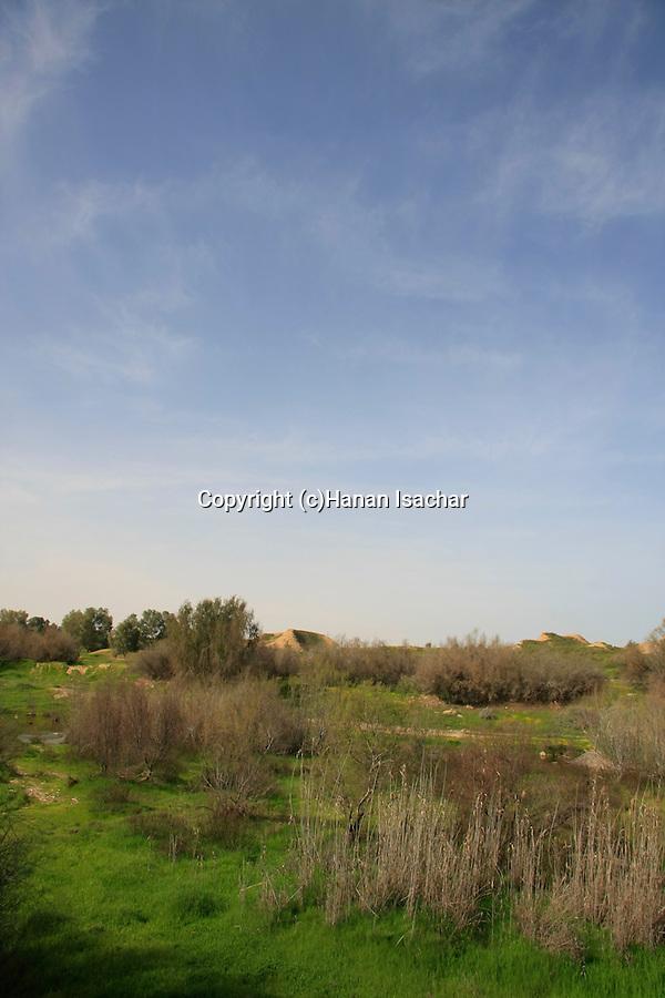 Israel, Besor region in the northern Negev. Besor stream