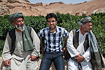 8 June 2013, Mula Sultan village, Kholm District , Mazar-i-Sharif, Balkh Province, Afghanistan. Local farmer Sayed Ahmed (left) speaks with Ahmad Fahim Jabri (centre) from the Horticulture and Livestock program and farmer Addullah Samadi on his orchard at  Mula Sultan village, Kholm District. He is growing pomegranates, almonds and figs. Mr.Ahmed is bagging his pomegranate fruit to prevent pests destroying his crop. Mr. Shah  is benefitting from the new National Horticulture and Livestock Project (NHLP). The trees are part of a re-generation program that allows him to access Farmers Field School that teaches better growing techniques, fertilising methods and marketing of his fruit. His production output has grown from a paltry 20% to something near 80% as a result of the NHLP. The NHLP is providing training and equipment to farmers to assist in increasing production and to improve management of lands and animals. Picture by Graham Crouch/World Bank