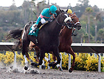 Zenyatta marks her 18th victory, winning the Clement L. Hirsch Stakes at Del Mar Thorobred Club, Del Mar, CA