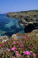 Europe/Espagne/Baléares/Minorque/Es Grau : La côte rocheuse