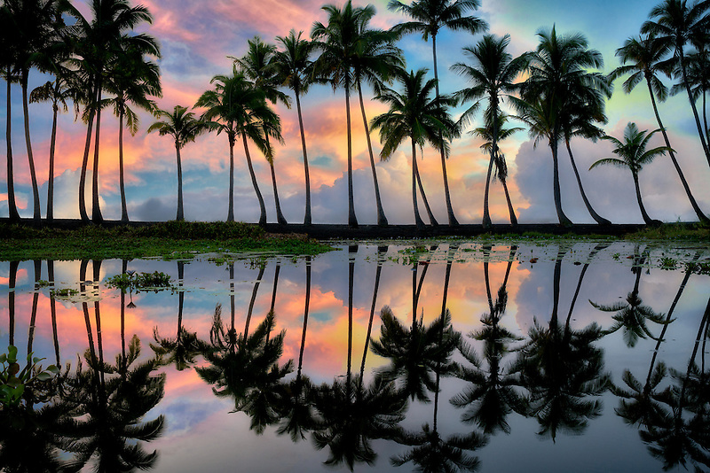 Palm trees reflecting in pond with sunrise. Punaluu Black Sand Beach. Hawaii Island