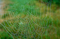 A spider web with dew.