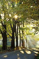 Gravel road through maples durring a foggy sunrise, Danby Four Corners, Rutland County, Vermont