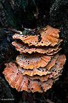Les champignons jouent un rôle important dans la décomposition du bois.fungi play an important role in the decomposition of wood.