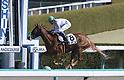 Horse Racing: Hanshin 1R at Hanshin Racecourse