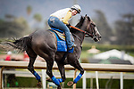 ARCADIA, CA - OCTOBER 29: Arrogate with exercise rider Dana Barnes aboard gallops in preparation for the Breeders' Cup Classic at Santa Anita Park on October 29, 2016 in Arcadia, California. (Photo by Alex Evers/Eclipse Sportswire/Getty Images)