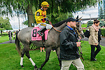 Crown Prince(8) with Jockey Gerry Olguin aboard before the Summer Stakes at Woodbine Race Course in Toronto, Canada on September 13, 2014 with Jockey Patrick Husbands aboard.