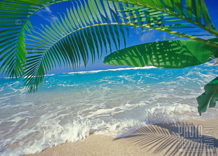 Palms, white sand beach, and blue ocean at Ehukai Beach, North Shore of Oahu