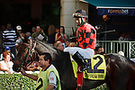 Frolic's Revenge  with jockey Paco Lopez leaving saddling paddock before winning the Ginger Brew Stakes at Gulfstream Park. Hallandale Beach, Florida. 12-24-2011