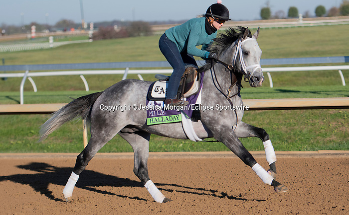 November 4, 2020: Halladay, trained by trainer Todd A. Pletcher, exercises in preparation for the Breeders' Cup Mile at Keeneland Racetrack in Lexington, Kentucky on November 4, 2020. Jessica Morgan/Eclipse Sportswire/Breeders Cup