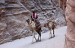 A Bedouin with his camels in the ancient Jordanian city of Petra. Petra is the most visited tourist attraction in Jordan, a symbol of the country for its historical and archaeological importance. It has been a UNESCO World Heritage Site since 1985.