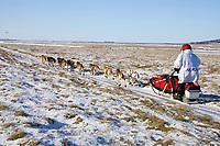 Paul Gebhardt on snowless tundra just up from the Unalakleet river nearing Unalakleet