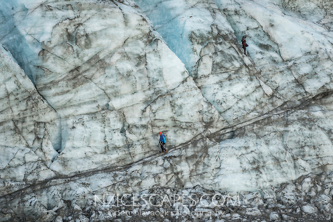 Ice climbers desending Fox Glacier terminus, Westland National Park, World Heritage Area, South Westland, New Zealand