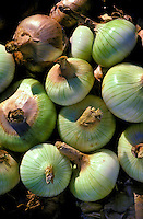 Maui onions grown in the Kula area, upcountry Maui