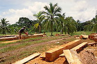 Man cuts teak trees that have been taken from Panama rainforest. He uses chainsaw to square off trees for export as lumber. Panama.