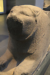Israel, Jerusalem, lion relief from Tel Hazor, 1500-1300 BC, on display at the Israel Museum