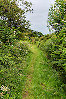 Cumbria, England, UK, near Carlisle.  Hadrian's Wall Footpath.