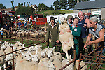Priddy Sheep Fair Somerset Uk 2009. Auctioneer moving sheep into a different pen prior to the start of the annual auction.