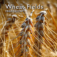 Wheat Fields | Wheat Pictures Photos Images & Fotos