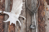 Moose antlers and old fishing net hang on the exterior wall of a bush cabin.